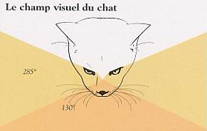 membrane oeil chat